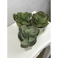 29089 Durie Plants  (Set Of 3)